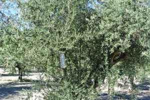 Økologisk insektfælde