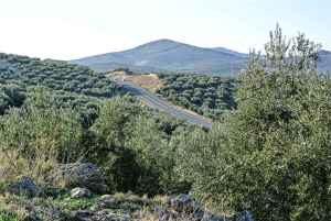 Højlands olivenolie